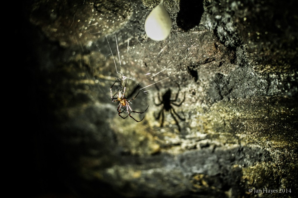 Meta Menardi or Cave Spider. Ugly but harmless.